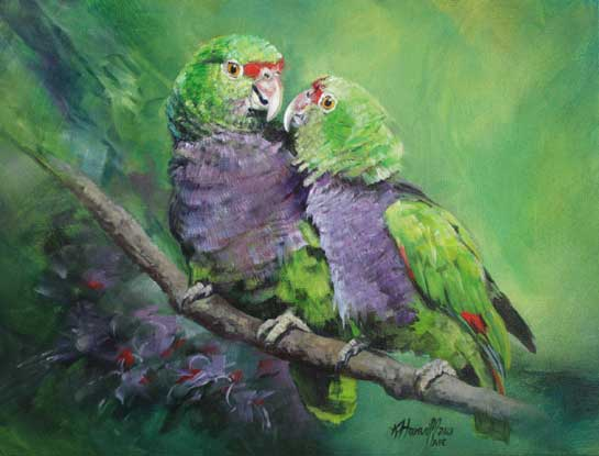 amazon parrots bird art by bird artist Kitty Harvill