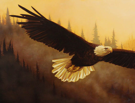 bald eagle bird art by bird artist Steven Lingham