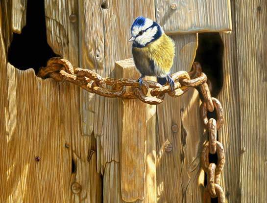 blue tit bird art by bird artist Steven Lingham