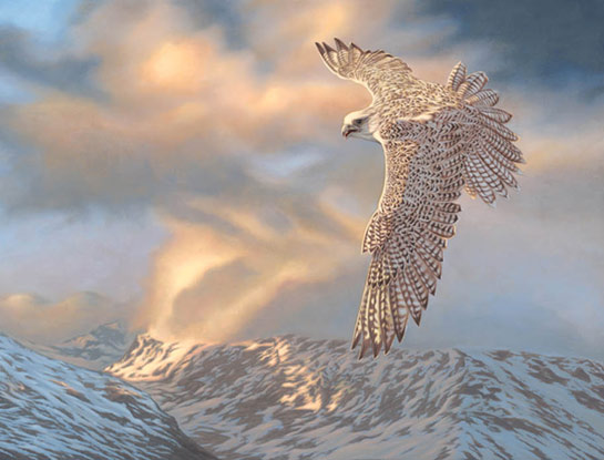 gyr falcon bird art by bird artist Steven Lingham