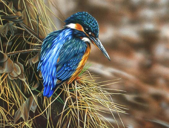 kingfisher bird art by bird artist Steven Lingham
