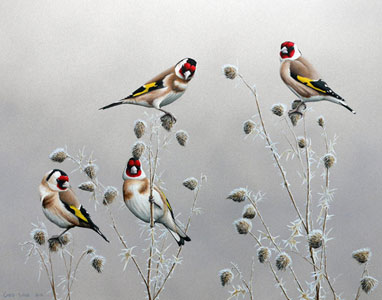 goldfinches Bird Art by Chris Lodge