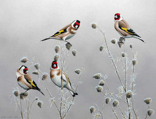 goldfinches bird print by Chris Lodge