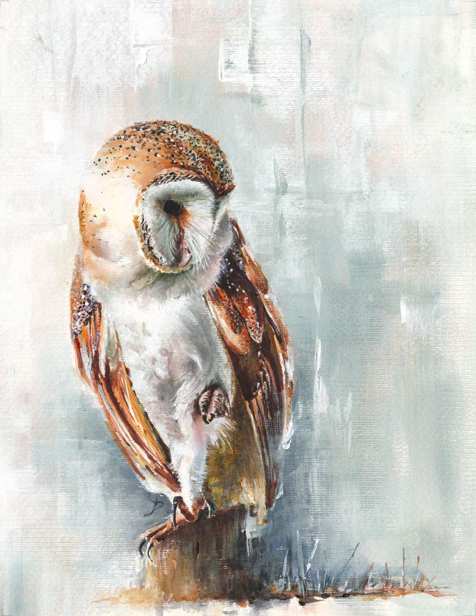 Barn Owl bird art by bird artist Janie Penny